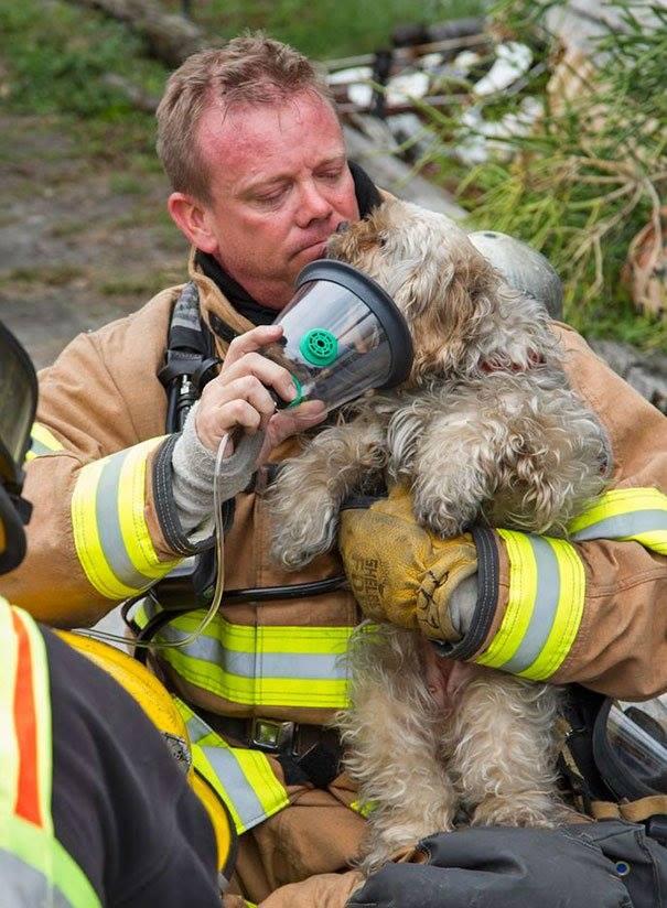 Brandweerman red hond